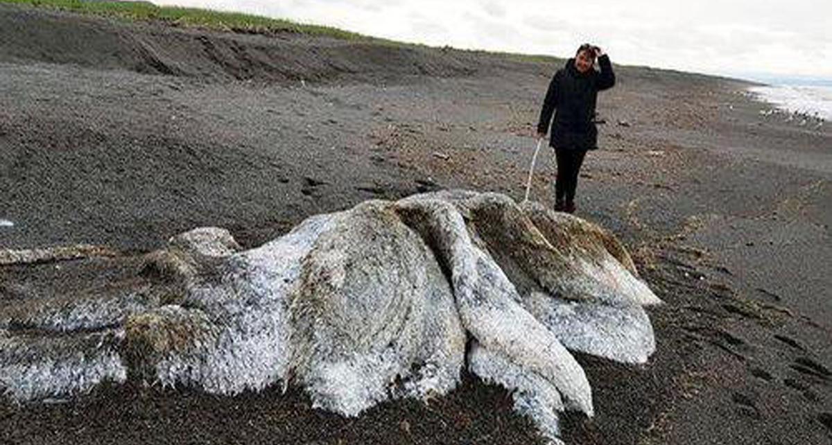 Penemuan `Monster` Laut Berbulu Gegerkan Warga Desa!