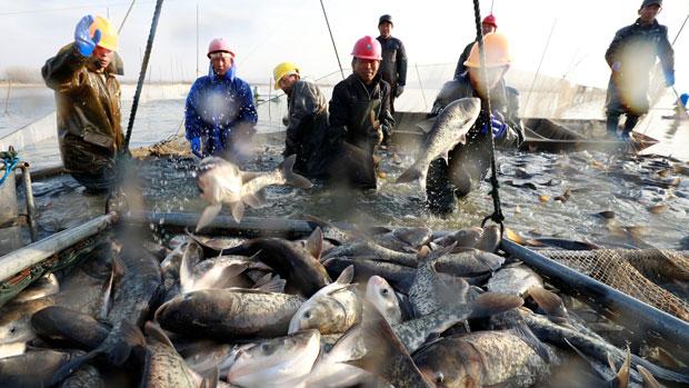 5 Negara Ini Penghasil Ikan Terbesar
