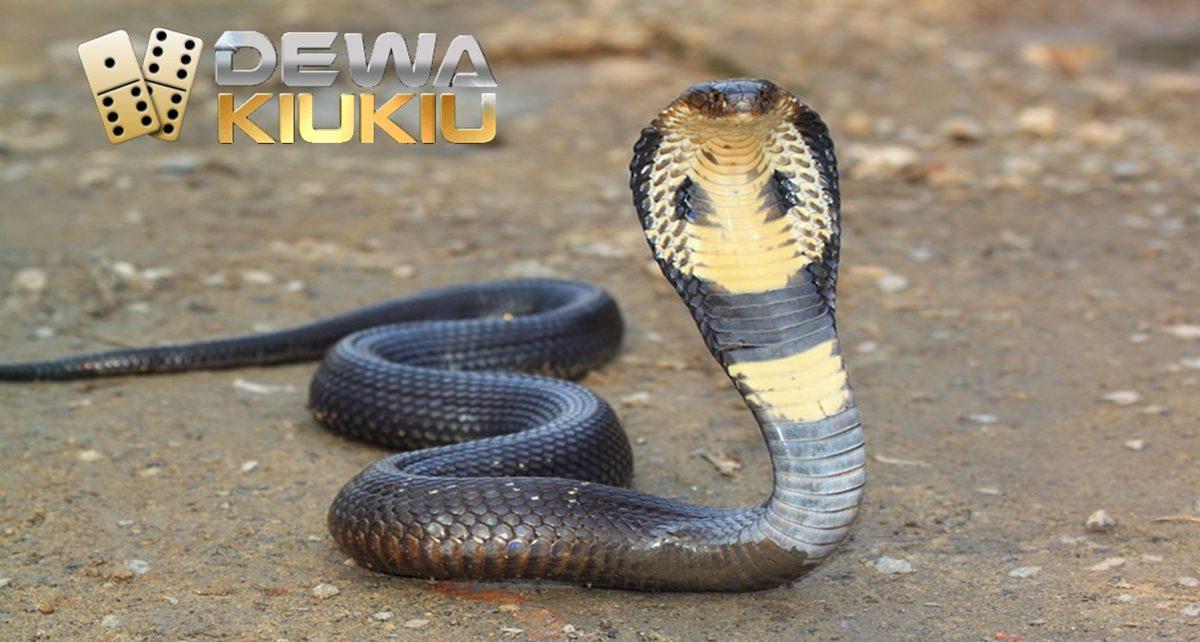 ular mematikan