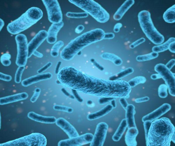 Ramai Bahaya Penyakit dari Jamur Enoki